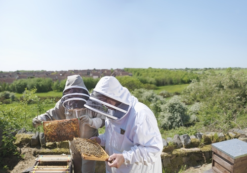 "Emery Oleochemicals' natural-based solutions designed to safeguard the future of bees, credited as ""non-toxic"""